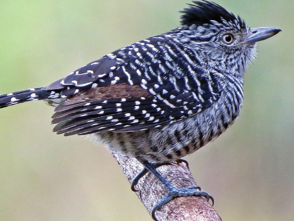 observacao de aves
